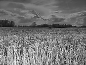 Muntowo 21.05.2019 Poland<br /> Dandelion field<br /> Photo: Adam Lach