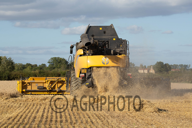 9.9.2020 Contractors harvesting Spring Wheat  in Lincolnshire <br /> ©Tim Scrivener Photographer 07850 303986<br />      ....Covering Agriculture In The UK.