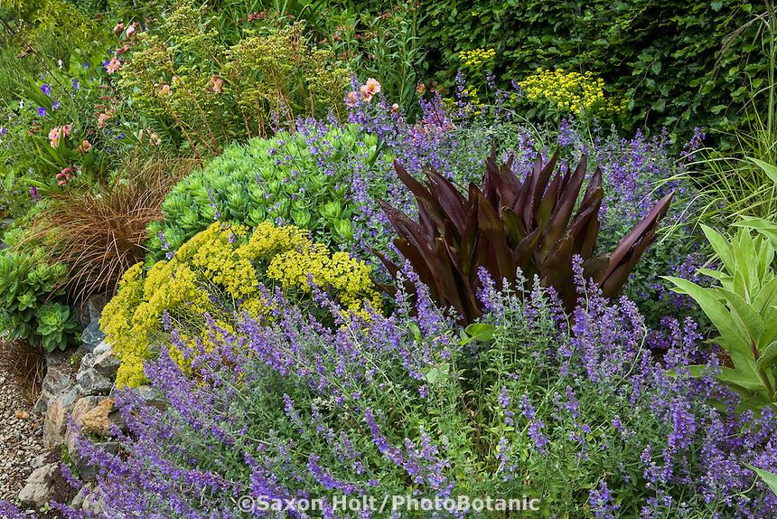 Perennial border with Nepeta mussinii, Eucomis 'Sparkling Burgundy', Euphorbia 'Dean's Hybrid, Sedum 'Autumn Joy', Digging Dog Nursery