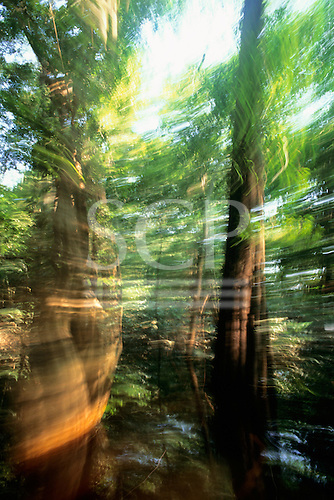 Amazon, Brazil. Inside of rainforest with movement. Disappearing forest.
