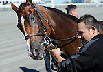 09 September 19: Bay to Bay, ridden by David Clark and trained by Brian Lynch, wins the grade 3 Natalma Stakes for two year old fillies at Woodbine Racetrack in Rexdale, Ontario.