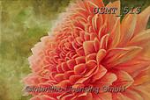 Malenda, FLOWERS, BLUMEN, FLORES, paintings+++++,USMT515,#f#, EVERYDAY