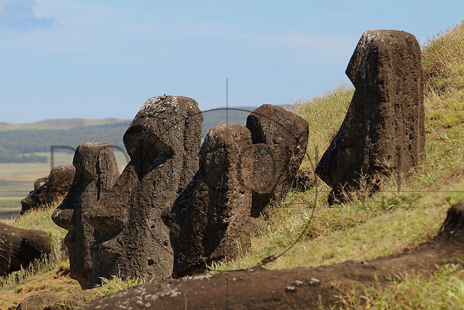 On the outside of the quarry at Rano Raraku are a number of Moai some of which are partially buried to their shoulders in the spoil from the quarry. They are distinctive in that their eyes were not hollowed out, they do not have pukao and they were not cast down in the islands civil wars.