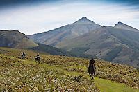 Europe/France/Aquitaine/64/Pyrénées-Atlantiques/Pays-Basque/Env d'Urrugne:  Randonnée équestre sur le Sentier des Contrebandiers  au Plateau  d'Aire Leku avec en fond le massif de la Rhune 905 m. [Autorisation : 2011-125] [Autorisation : 2011-126] [Autorisation : 2011-127]