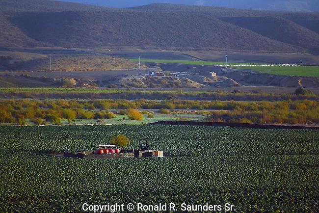 Industrial farm