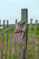 Bathing suit hanging on a beach path fence, Cape Cod, MA