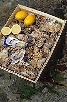 Europe/France/Bretagne/56/Morbihan/Presqu'île de Rhuys: Détail d'une bourriche d'huitres et citrons