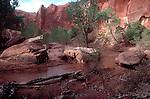 Coyote Gulch, Glen Canyon National Recreation Area, Utah, Southwest USA,.