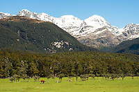 Pastures in Paradise with Humboldt Mountains, Mount Aspiring National Park, Central Otago, New Zealand, NZ