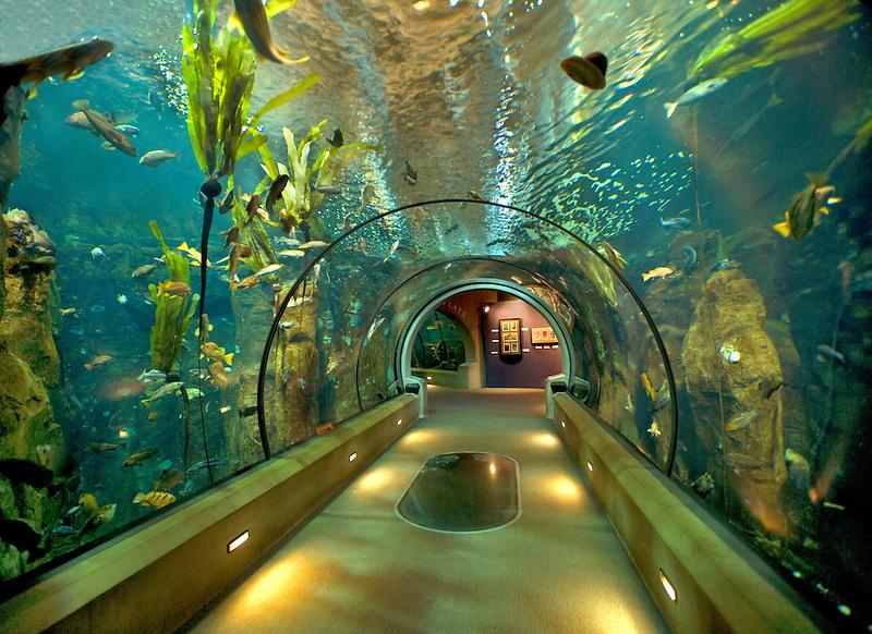 Sea life aquarium. Oregon Coast Aquarium. Newport, Oregon