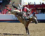 Cody Wright scored big with an 87 point ride on the Buetler & Son Rodeo Company bronc Tom Dooley during the Cowboy Christmas run July 29th at the Greeley Independence Stampede Rodeo in Greeley, Colorado.