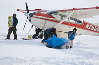 Volunteer checkpoint helpers haul musher supplies from Bruce Moroney's plane on the Yukon River at the Eagle Island checkpoint during Iditarod 2009
