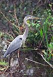 Birds of Ding Darling NWR, Sanibel Island, FL