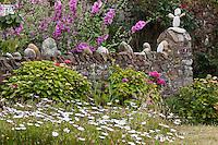 Europe/France/Normandie/Basse-Normandie/50/Manche/Presqu'île de la Hague/St-Germain-des-Vaux:  Détail muret fleuri du jardin d'une maison
