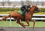 April 03, 2014: Hip 55 Malibu Moon - Tap Your Heels consigned by Niall Brennan worked 1/8 in 09:4.  Candice Chavez/ESW/CSM