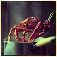 Europe/France/Bretagne/29/Finistère: Araignée de mer - Stylisme : Valérie LHOMME // France, Finistere, spider crab, photography styling by Valerie Lhomme