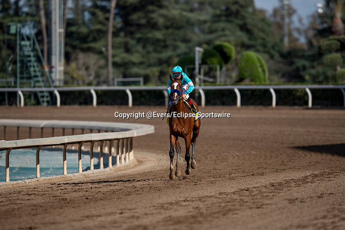 MAR 07: Authentic and Drayden Van Dyke after the San Felipe Stakes at Santa Anita Park in Arcadia, California on March 7, 2020. Evers/Eclipse Sportswire/CSM