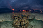 Shallow corals split level at sunset