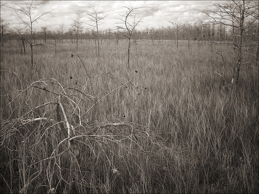 "Dry season<br /> From ""In the Wild"" series. Everglades, Florida, 2005"