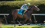 LEXINGTON, KY - APRIL 16: #9 Exaggerated wins the Giant's Causeway Stakes at Keeneland on April 16, 2016 in Lexington, Kentucky.Photo by Samantha Bussanch/Eclipse Sportswire/Getty Images)
