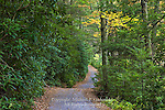Rhododendron Lined Road, Carbon County, Pennsylvania