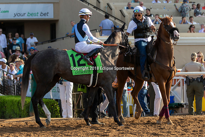 DEL MAR, CA  AUGUST 18:  #12 Animosity, ridden by Tyler Gaffalione, in the post parade of the Del Mar Oaks Presented by The Jockey Club (Grade 1) on August 18, 2018 at Del Mar Thoroughbred Club in Del Mar, CA.(Photo by Casey Phillips/Eclipse Sportswire/Getty Images