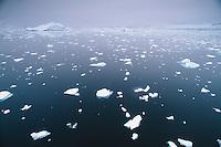 Broken ice floating in water, Antartic Peninsula, Antarctica