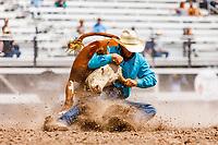 USA , Wyoming, Cheyenne,  Steer wrestling section  at 2017 Cheyenne Frontyer days