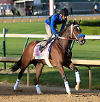 April 23, 2014  She's A Tiger gallops at Churchill Downs.  She is trained by Jeff Bonde.