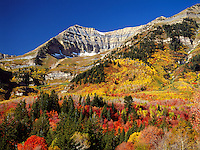 Art in Nature 9309-0342 - The backside of Mount Timpanogos in autumn; the colorful foliage of the hillside and valley provide rich contrast to the deep blue sky. Wasatch Range, Rocky Mountains, Utah.