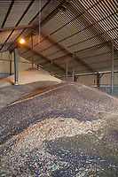 22-7-2021 Oilseed rape in an on farm store <br /> ©Tim Scrivener Photographer 07850 303986<br />      ....Covering Agriculture In The UK....