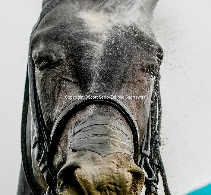June 3, 2021: A horse gets hosed down after the Astoria Stakes during Thursday at the Belmont Stakes Festival at Belmont Park in Elmont, New York. Scott Serio/Eclipse Sportswire/CSM