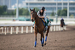DEC 11,2015: Cirrus Des Aigles ,trained by Corin Barande-Barbe,exercises in preparation for the Hong Kong Vase at Sha Tin in New Territories,Hong Kong. Kazushi Ishida/ESW/CSM