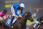 DUBAI,UNITED ARAB EMIRATES-MARCH 31: (10) Jungle Cat,ridden by James Doyle,wins the Dubai World Cup at Meydan Racecourse on March 31,2018 in Dubai,United Arab Emirates (Photo by Michael McInally/Eclipse Sportswire/Getty Images)