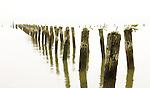 Old pilings, Astoria, Oregon, USA