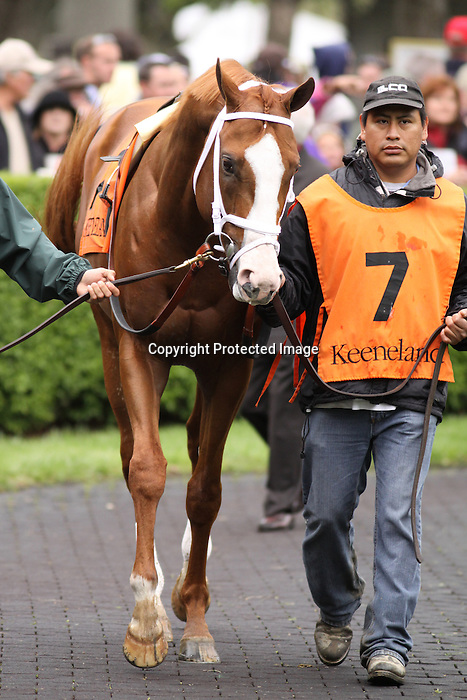 Stratford Hill in the paddock prior to running in the Shakertown (grIII) at Keeneland Race Course. Lexington, KY. 04.16.2011