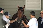 June 4, 2015: Triple Crown hopeful American Pharoah schools in the Belmont paddock in preparation for the Belmont Stakes. At right is trainer Bob Baffert.  Belmont Park, Elmont, NY. Joan Fairman Kanes/ESW/CSM