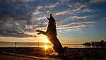 Piper Wallheiser, the border collie, dances during a Christmas Eve sunset at Shell Point Beach along the Forgotten Coast of the north Florida panhandle.