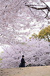 A woman looks at cherry blossoms in Tokyo, Japan, April 5, 2016.  (Photo by Yuriko Nakao/AFLO)