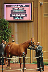 Hip 279 Pure Clan, consigned by Hill n'Dale sales became the Keeneland November sale topper when she sold for $4,500,000 to TNT Stud.  November 7,2012.
