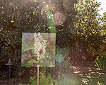 October 26, 2017. Raleigh, North Carolina.<br /> <br /> Plant, insect and bird photographs were placed around the mansion grounds. <br /> <br /> A new garden designed by Ben Skelton containing native Plants For Birds was dedicated at the North Carolina Executive Mansion.