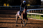 November 4, 2020: Come Dancing, trained by trainer Carlos Martin, exercises in preparation for the Breeders' Cup Filly & Mare Sprint at Keeneland Racetrack in Lexington, Kentucky on November 4, 2020. Jon Durr/Eclipse Sportswire/Breeders Cup