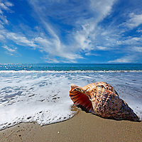 Beach with conch shell under blue sky