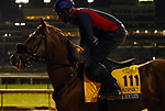 October 30, 2018 : Mind Your Biscuits at Churchill Downs on October 30, 2018  in Louisville, Kentucky in preparation for the Breeders' Cup Classic. Mary M. Meek/ESW/CSM