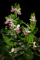 """Minnesota Royalty's Night Life""<br />