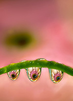 wet,water,water drop,water droplet,water droplets,droplet,droplets,water,bead,waterbead,water bead,drops,waterdrop,waterdrops,drip,drips,dripped,dripping,spring time,springtime,spring,dribble,trickle, closeup,close up,close-up,close ups,close-ups,close ups,closeups,extreme close-up,mist,dew,