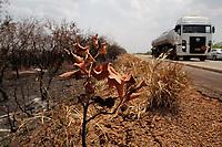 AMAZONAS, HUMAITÁ, 29.08.2019: DESMATAMENTO-HUMAITÁ. Árvores queimadas na beira da estrada. Área queimada na zona rural, na BR 319, na tarde desta quinta-feira (29), no trecho que liga Humaitá a Lábrea, no interior do Amazonas. <br /> Foto: Sandro Pereira/Codigo19