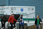 HOT SPRINGS, AR - JANUARY 16: Uncontested #6 walking from the barn area to the paddock before the running of the Smarty Jones Stakes at Oaklawn Park on January 16, 2017 in Hot Springs, Arkansas. (Photo by Justin Manning/Elipse Sportwire/Getty Images)