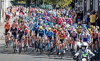 cross-town traffic<br /> <br /> Stage 10 from île d'Oléron (Le Château-d'Oléron) to Île de Ré (Saint-Martin-de-Ré)(169km)<br /> <br /> 107th Tour de France 2020 (2.UWT)<br /> (the 'postponed edition' held in september)<br /> <br /> ©kramon