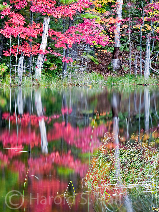 Reeds and red maple trees reflect in a lake near Munising, Michigan.